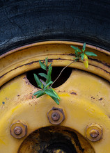 Wheel Of Old Truck With Japane...