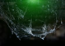Horror Cobweb  Spider Web   In...