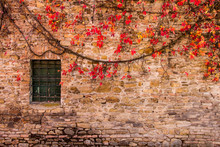 Wall With Creeper And Red Leaves