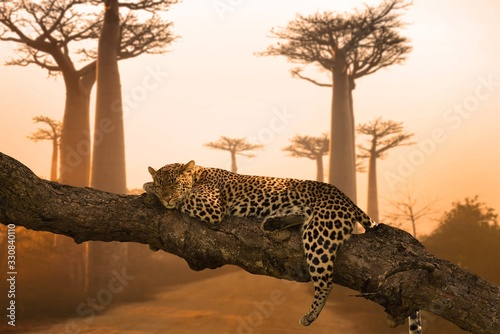 Tableau sur Toile Beautiful shot of a leopard sleeping on the tree - great for a background