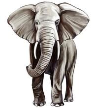 Animal Elephant, Art Illustrat...