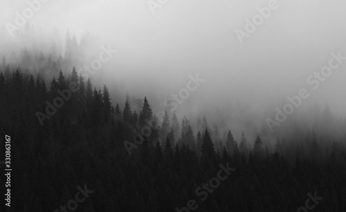 Fototapety, obrazy: Black and white pine tree forest and clouds