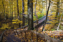 A Boardwalk And Bridge Winds It's Way Through The Autumn Woods And Across The Galien River At Warren Woods State Park Near Three Oaks, Michigan.