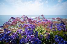 Beach Flowers