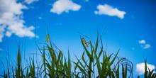 バッタのいる夏の草む...