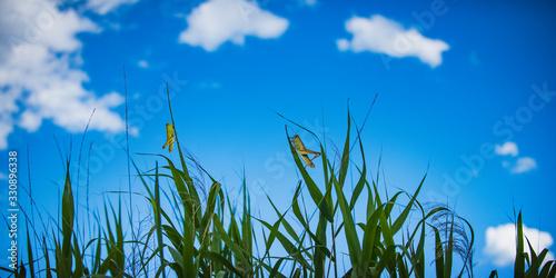 Valokuva バッタのいる夏の草むら