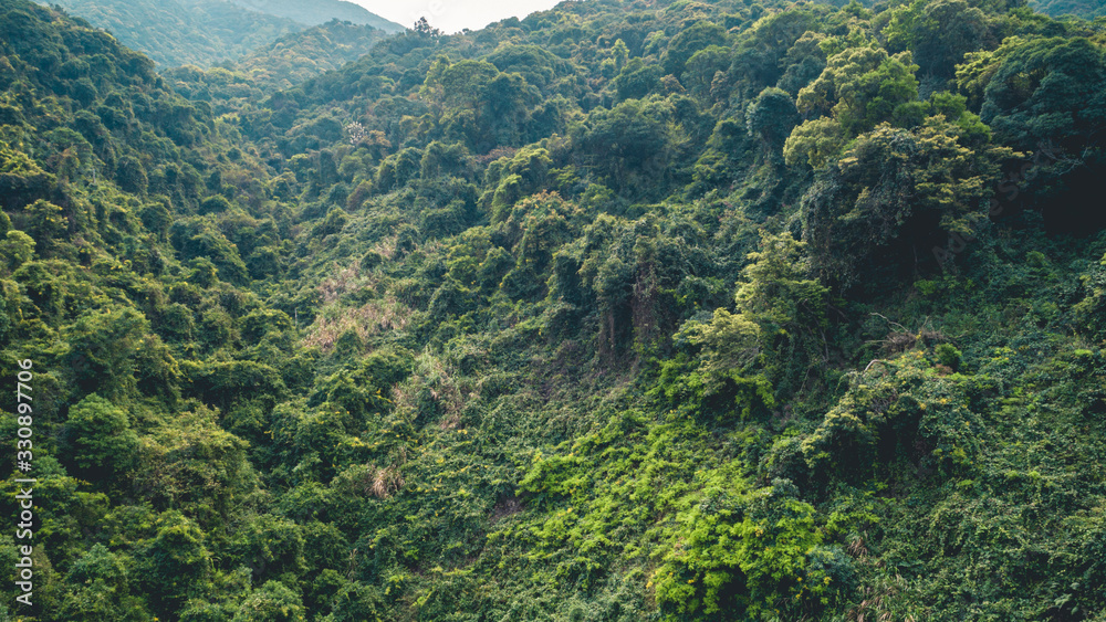 Aerial view of tropical forest in spring