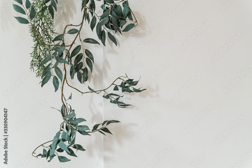 Fototapeta a branch of a green plant on a white background copies the space. plant on the wall, minimalism