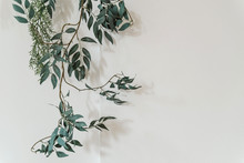A Branch Of A Green Plant On A White Background Copies The Space. Plant On The Wall, Minimalism