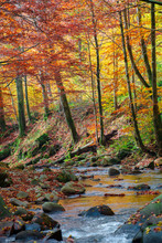 Forest River In Autumn. Rapid ...