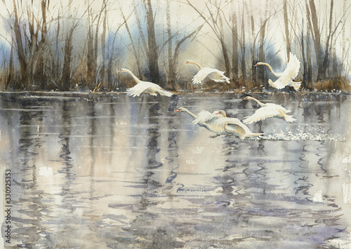 Obraz White swans flying over water. Picture created with watercolors. - fototapety do salonu