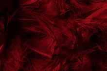 Beautiful Dark Red Maroon Feat...