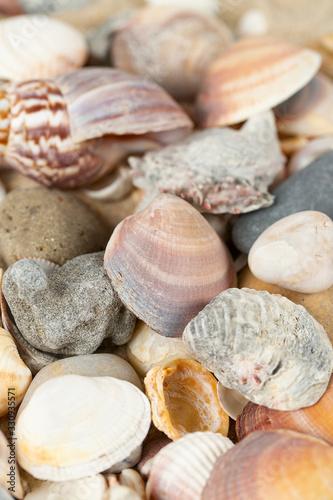 Obraz beautiful sea shells on sand - fototapety do salonu