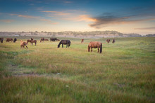 Horses Grazing On Grassland Under Blue Sky And White Clouds