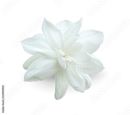 arabian jasmine, jasminum sambac, flower  jasmine tea flower isolated on white background Canvas Print