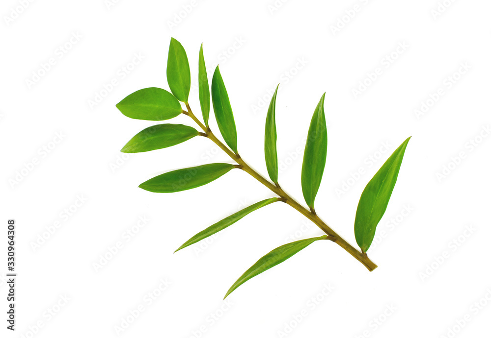 Fototapeta branch with green leaves isolated on white