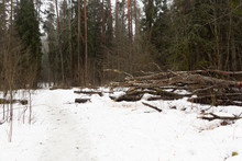 Cloudy Rainy Day In Forest In Early Spring With Melting Snow On The Path, Naked Ground And Fog Among Trees