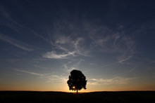 A Lonely Solitary Tree Infront...