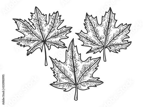 Obraz na płótnie Maple leaves set sketch engraving vector illustration