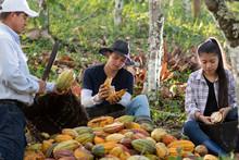 Familia Cosechando Cacao