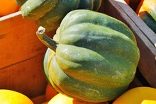 Crate Of Green And Orange Acorn Squash In The Fall
