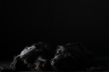 Black Dog In The Black Room