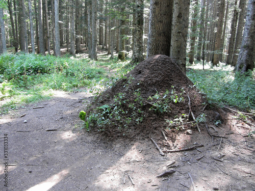 Huge anthill in the forest . The big house for ants Wallpaper Mural