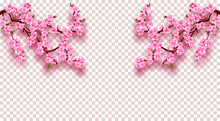Sakura On Both Sides. Cherry Branches With Delicate Pink Flowers, Leaves And Buds. On A Transparent Background Check. Illustration