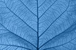 Extreme close up texture of blue toned leaf veins