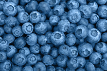 Close Up Background Of Blue Toned Fresh Blueberry