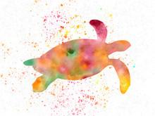 Sea Turtle In Watercolor 01