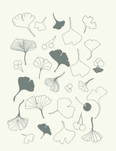 Healing Leaves Of Ginkgo Biloba Tree With Fruits, Hand-drawn, Geometric Seamless Pattern, Isolated Vector.