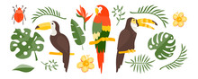 Vector Tropical Set Of Exotic ...