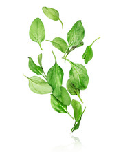 Spinach Leaves In The Air On A White Background