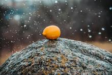 Lemon On A Rock.