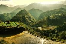 Mountain Rice Field In Sapa, V...