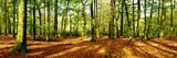 Fototapeta Las - Forest panorama in autumn with lots of sunlight and autumn leaves on the forest floor