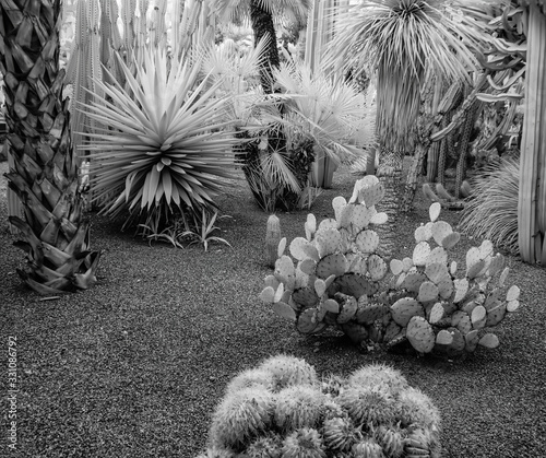 Infrared Photo of Cacti, Jardins Majorelle, Marrakesh, Morocco Wallpaper Mural