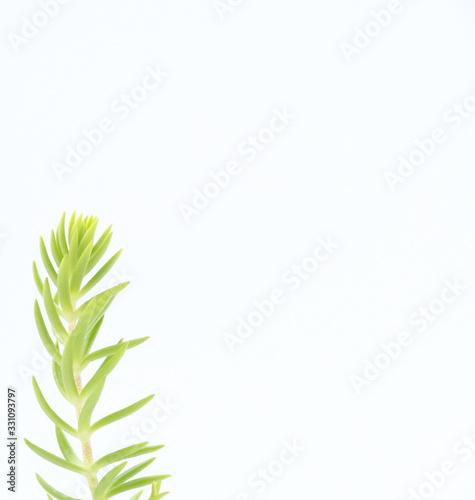 Photo Green seedling on white background