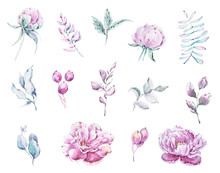 Watercolor Peonies And Leaves ...