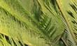 Palmenblätter mit Wassertropfen