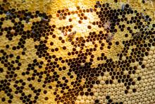 Bee Colony Full Of Honey High ...