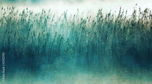 Fotografia Landscape with morning fog over wetland and reed grass