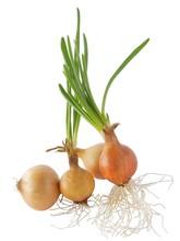 Onions Bulbs With Growing Gree...