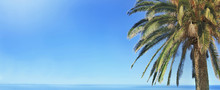 Panoramic View On Palm Tree In Front Of Blue Sky And Over The Sea