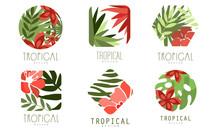 Geometric Tropical Logo Design...
