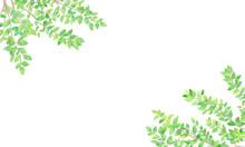 手描き 水彩 新緑の...