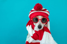 Dog Wearing Red Sunglasses, Kn...