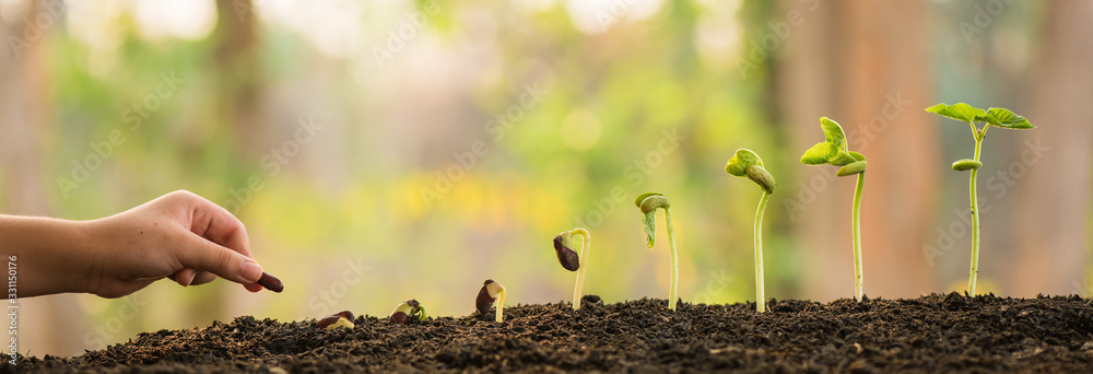 Fototapeta hand holding and caring a green plant over lighting background, planting tree, environment, background.agriculture, horticulture. plant growth evolution from seed to sapling, ecology concept.