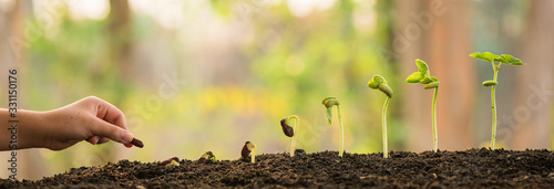 Fotografering hand holding and caring a green plant over lighting background, planting tree, environment, background
